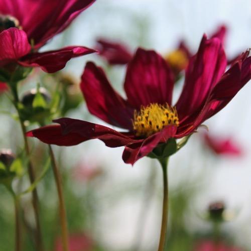 gefüllte und ungefüllte blüten
