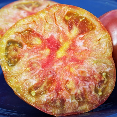 costoluto tomaten pflanzen bestellen