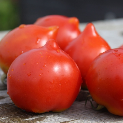 Fablonelystyni Tomate Saatgut Mini Beefsteak Tomate 10+ Samen