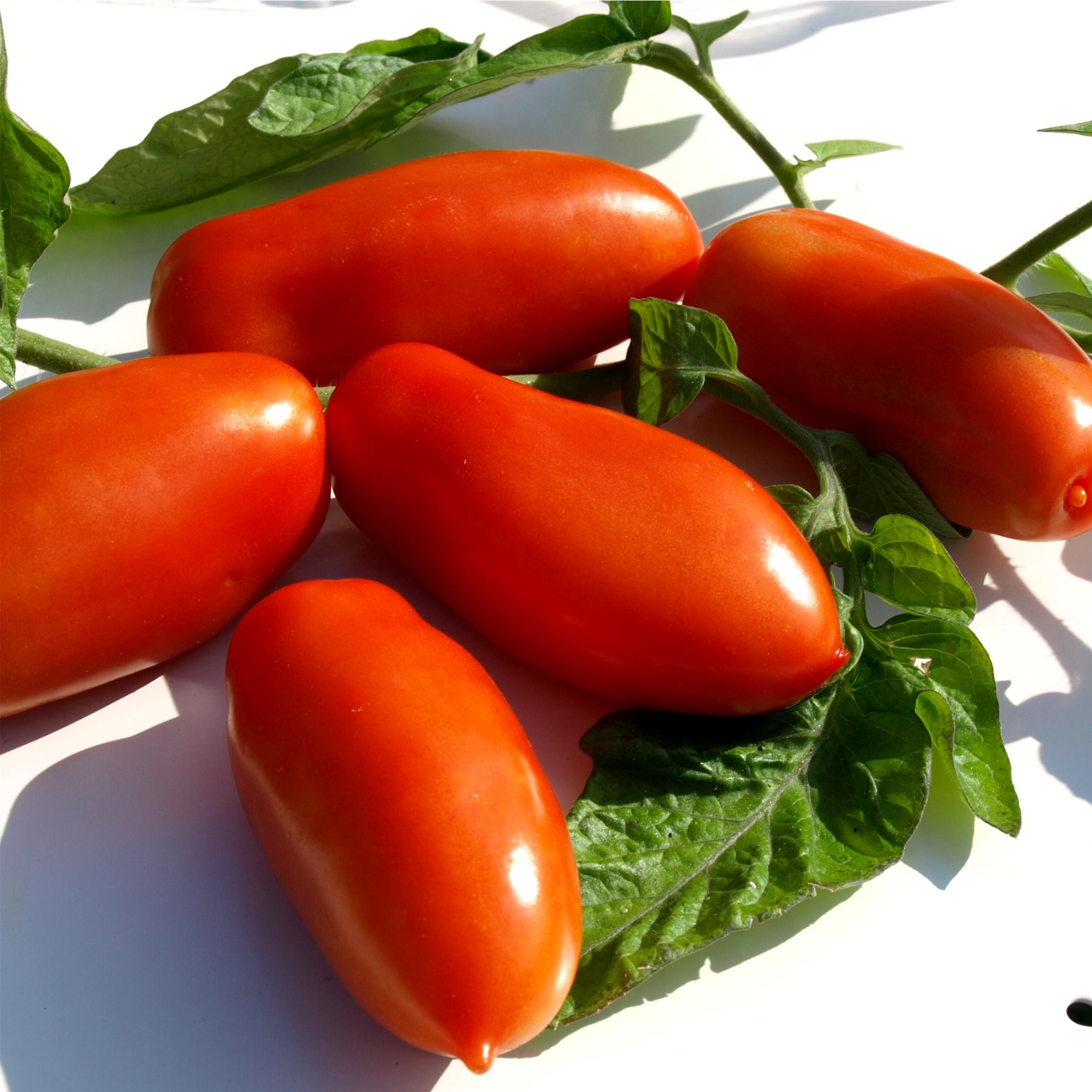 deaflora tomate san marzano. Black Bedroom Furniture Sets. Home Design Ideas