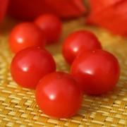 deaflora physalis und tomatillo. Black Bedroom Furniture Sets. Home Design Ideas